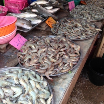 more fish – prawns