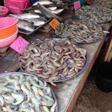 more fish – prawns