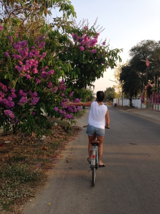 cycling to the market