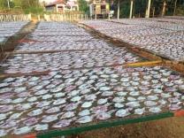 sun dried fish