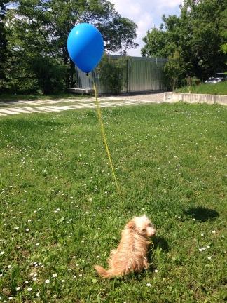ben and his balloon