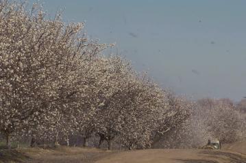 pesticides sprayed on Almond tree