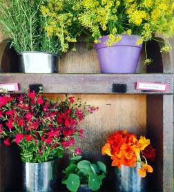 edible flowers: fennel pollen, sage flowers, nasturtium flowers