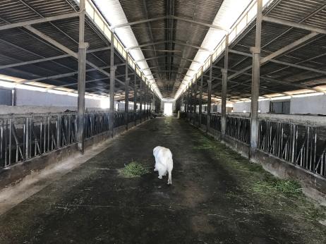 biodynamic farm